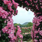 よしうみバラ公園は無料が信じられないぐらい素敵な、しまなみ海道スポット!